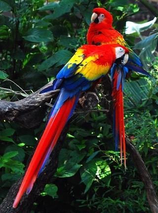 rainforest biome information