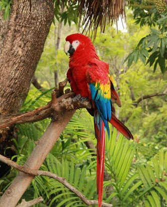 Tropical Rainforest Tree with Macaw